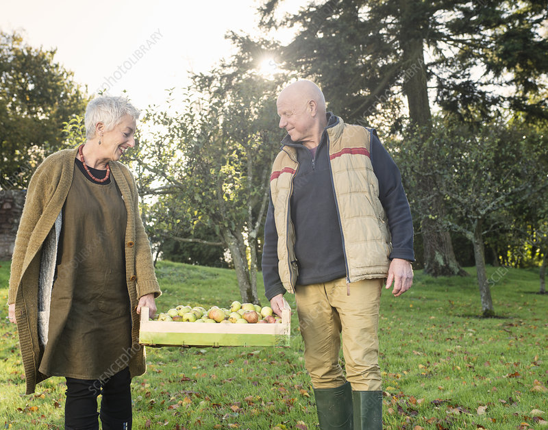 Senior couple carrying crate of apples