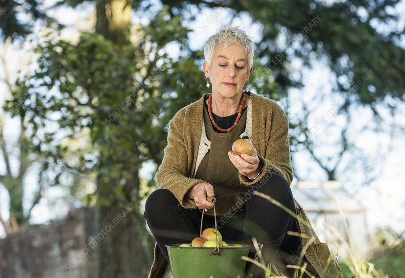 Senior woman inspecting apple from bucket