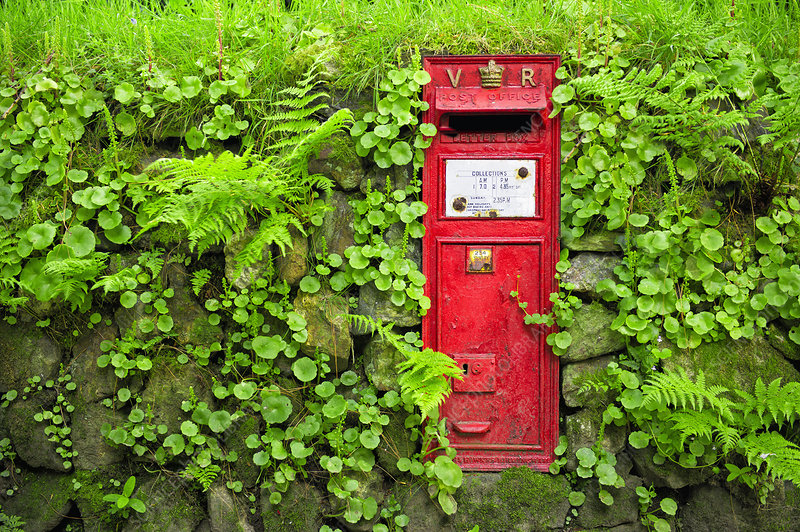 Red mailbox and dry stone wall, UK