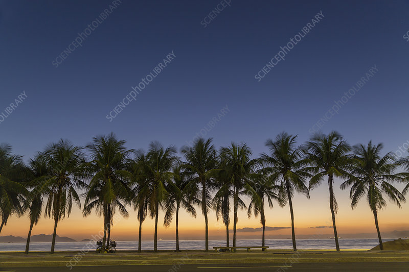 Row of palm trees on Copacabana beach
