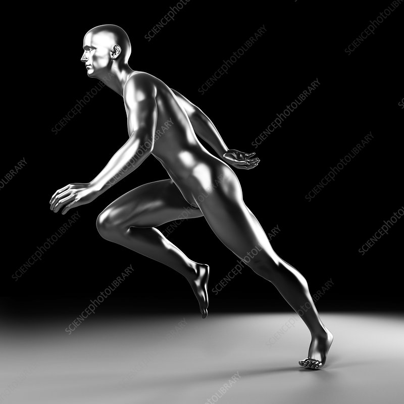 Human anatomy of a runner, artwork