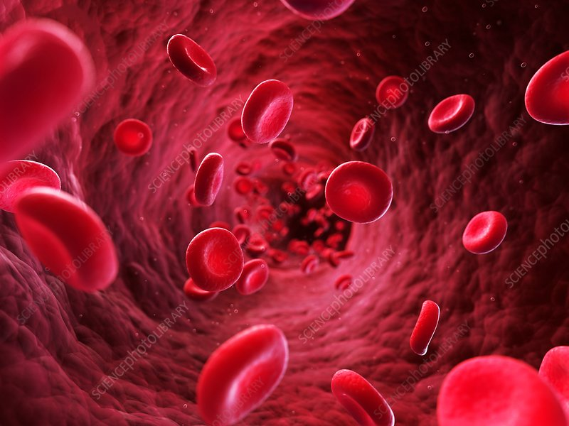 Human red blood cells, artwork