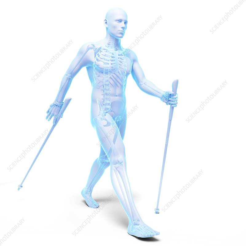 Nordic walker, artwork