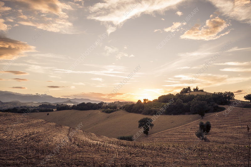Harvested fields at sunset, Italy