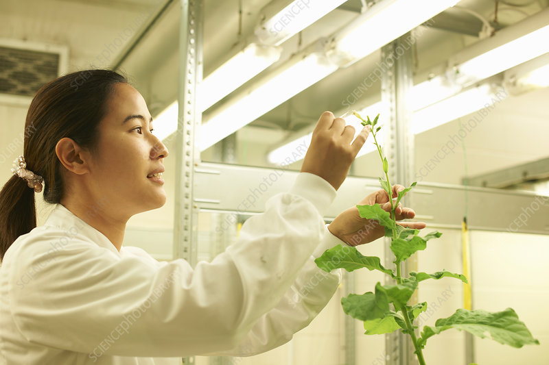 Scientist picking sample from plant