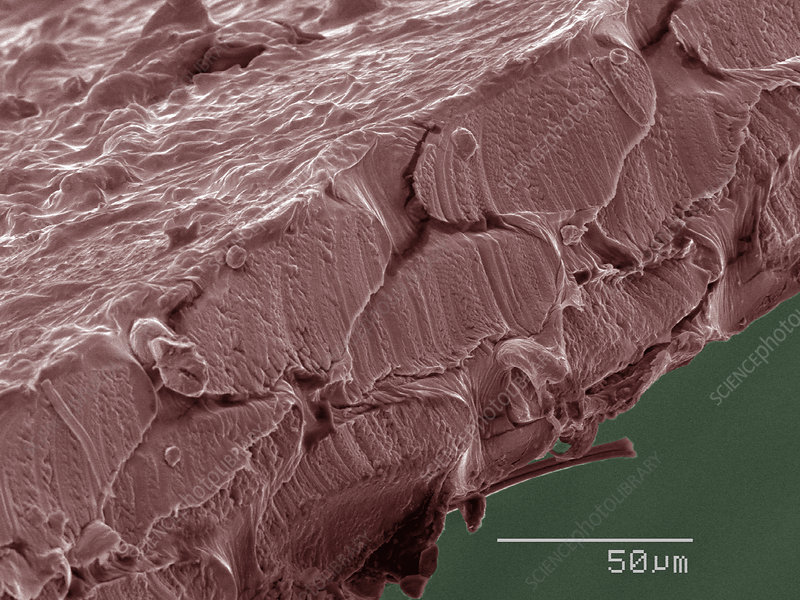 Coloured SEM of dental floss