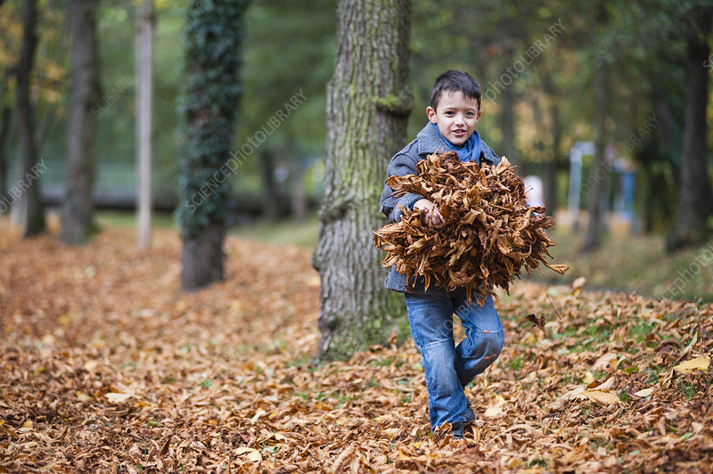 Young boy carrying bundle of leaves