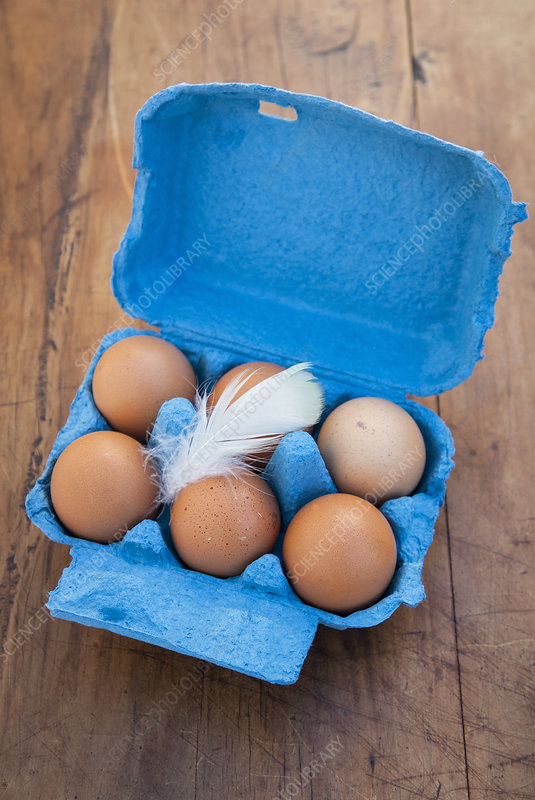 Six brown eggs in open blue egg box