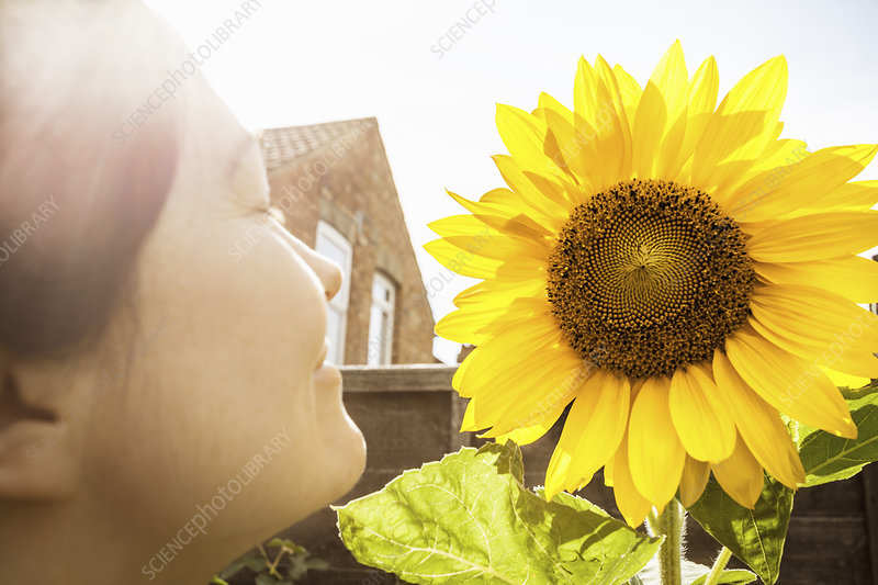 Close up of mature woman and sunflower