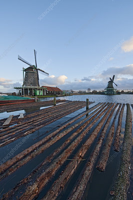 Windmill and floating logs, Netherlands