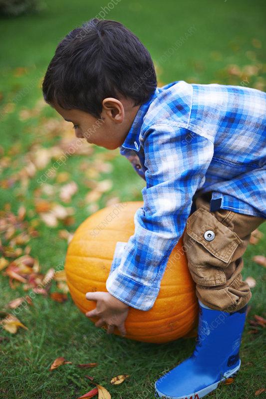 Toddler in the garden picking up pumpkin