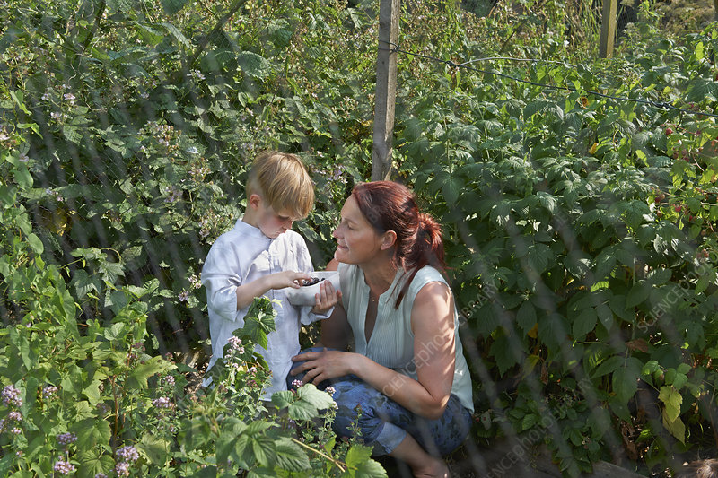Mother and son berry-picking