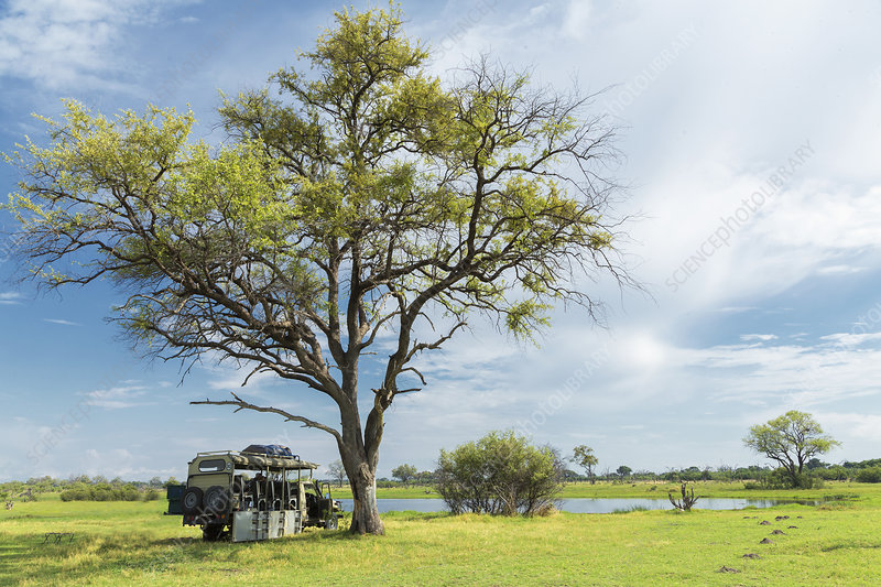 Stationary safari truck, Botswana
