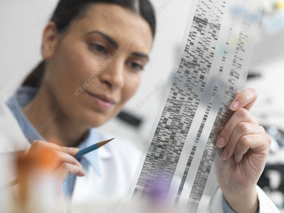 Scientist examining DNA gel
