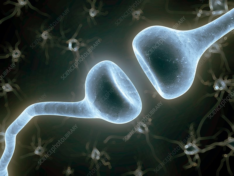 Human synapse, artwork
