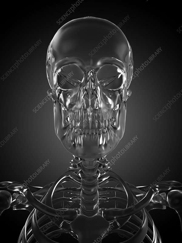 Human skull rendered in glass, artwork