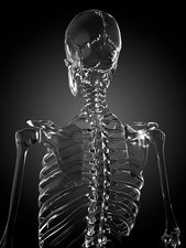 Human skeleton rendered in glass, artwork
