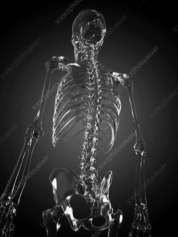 Human skeleton rendered in glass, artwork