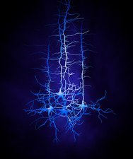 Nerve cell network, artwork