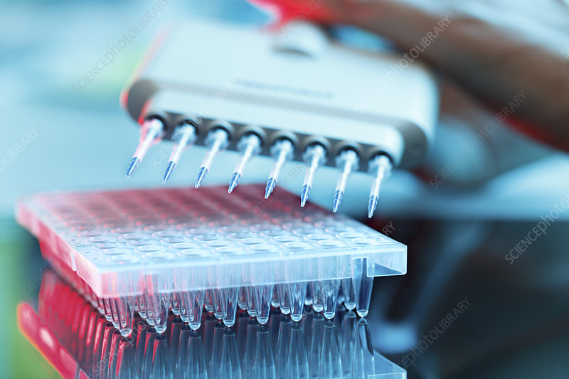 Multi pipettes used in microbiology lab