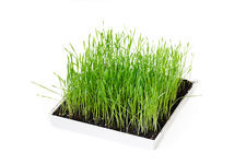 Grass growing in a box