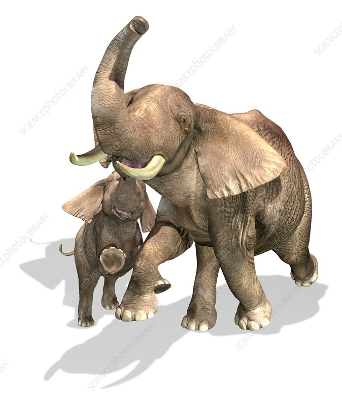 Adult and young elephants, artwork