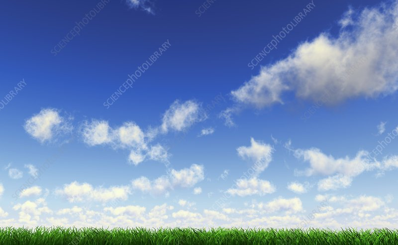 Grass against a blue sky, artwork