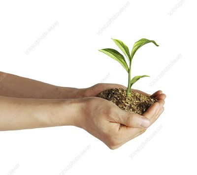 Person holding a seedling, artwork