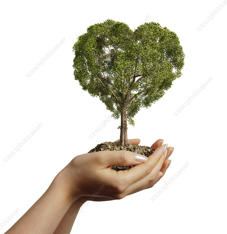 Hands holding heart shaped tree, artwork