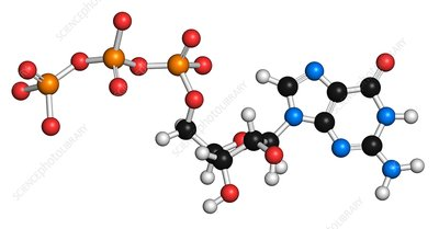 Guanosine triphosphate molecule