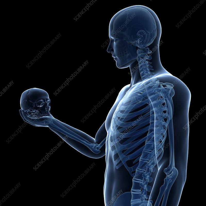 Person holding human skull, illustration