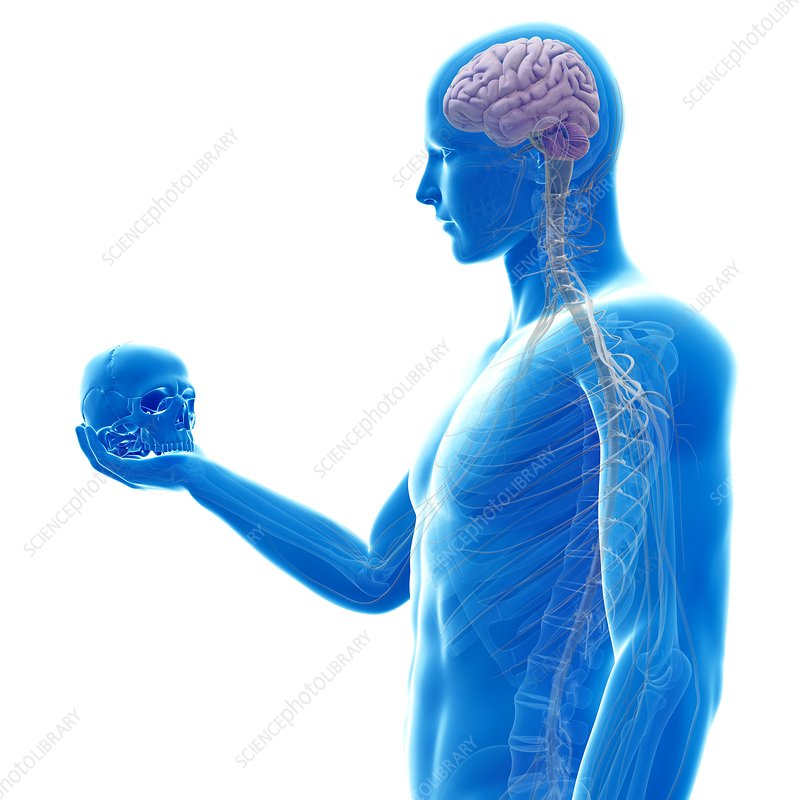 Person holding human skull, illustration