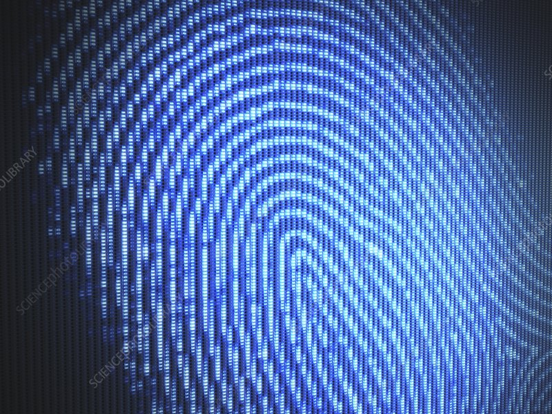 Fingerprint, illustration