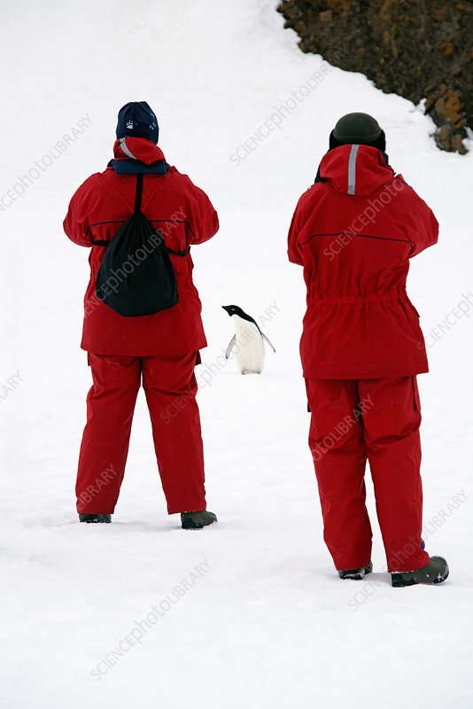 Two people and a chinstrap penguin