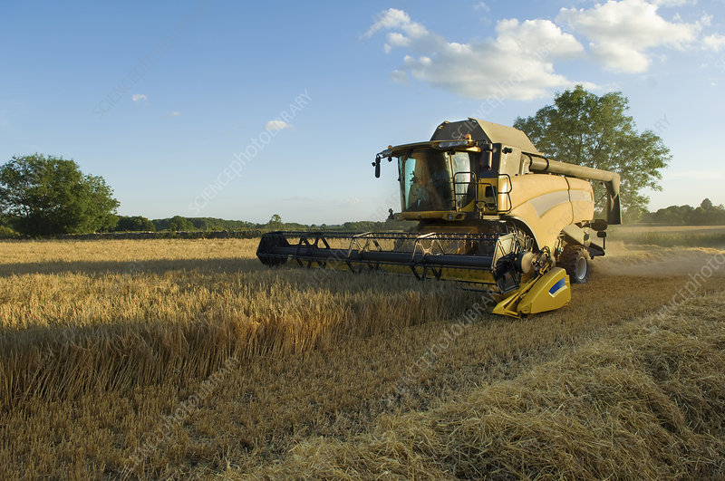 A combine harvester in a cereal crop