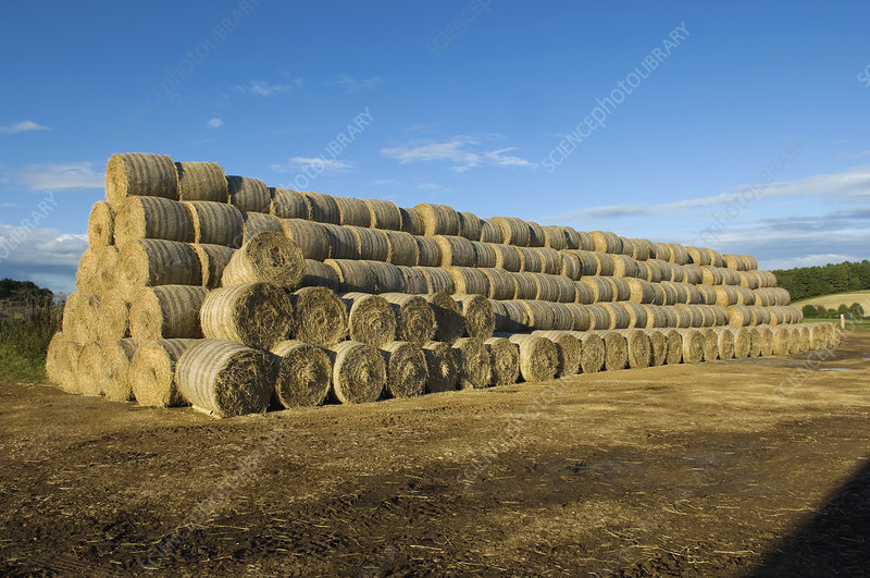 Stacks of round bales of straw in a field
