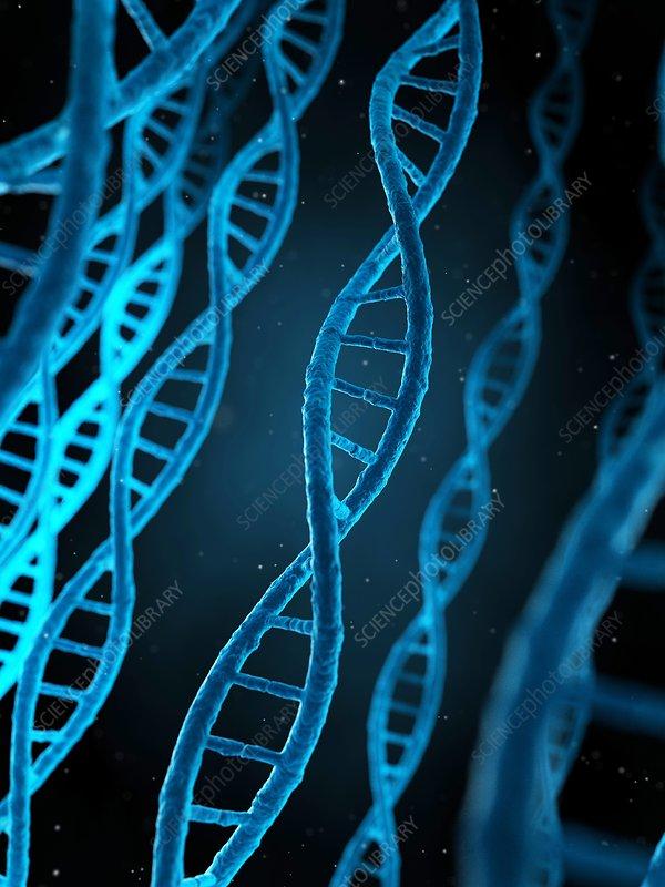 Human DNA, illustration