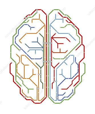 Brain, network diagram