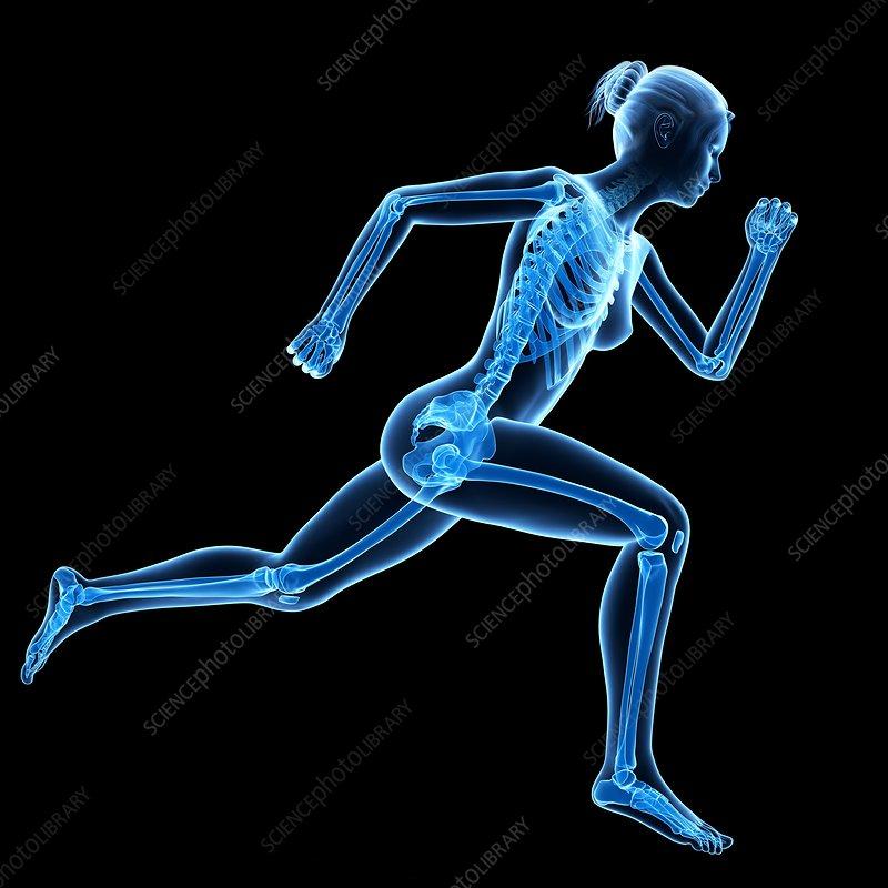 Skeletal system of jogger, illustration