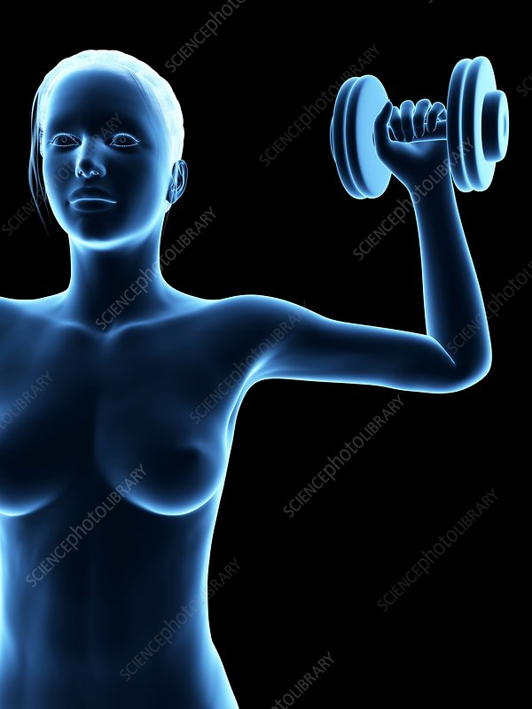 Woman weight training, illustration