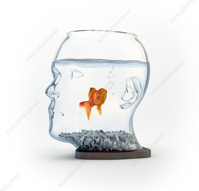 Goldfish in a bowl, illustration
