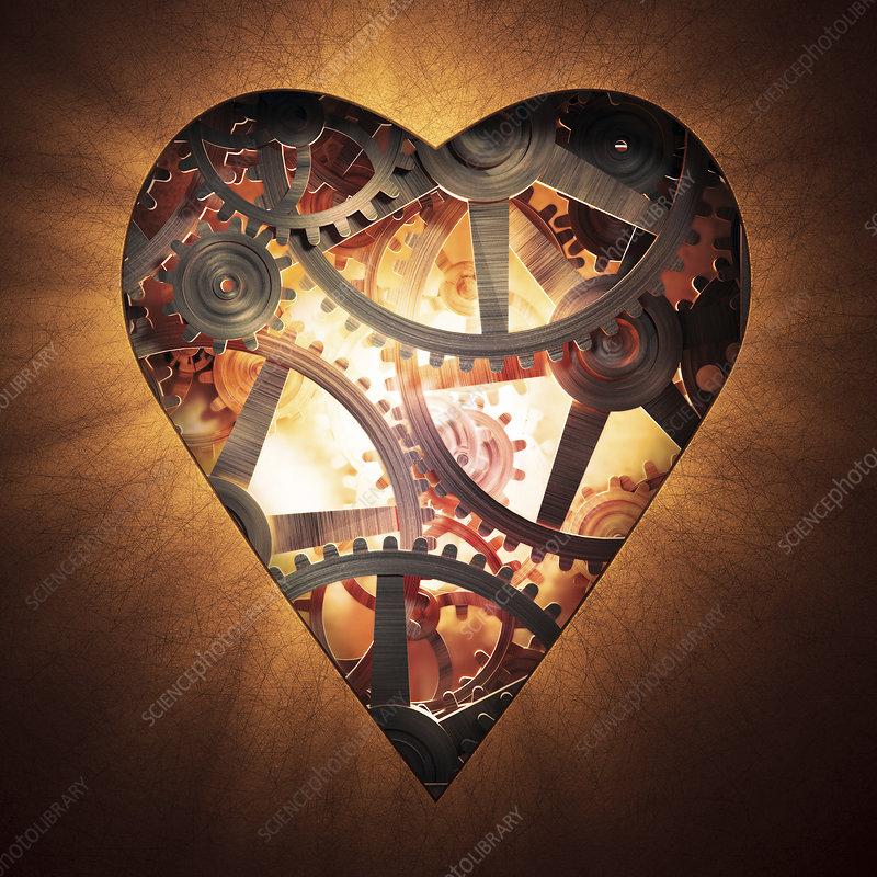 Mechanics of the heart, illustration