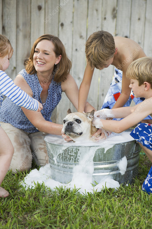 Family washing a dog in a tub