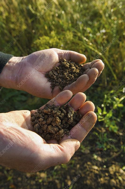 Man's hands holding soil samples