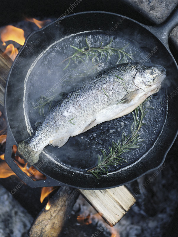 Fish in a frying pan over a camp fire