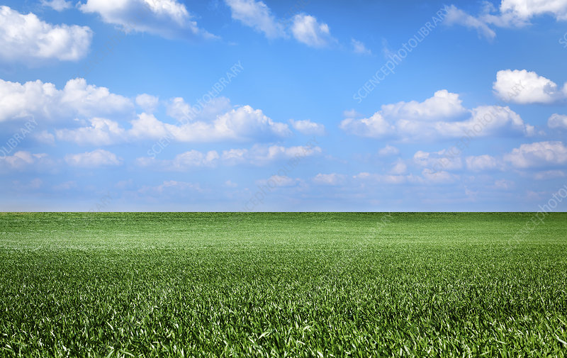 Green field and clouds in a blue sky