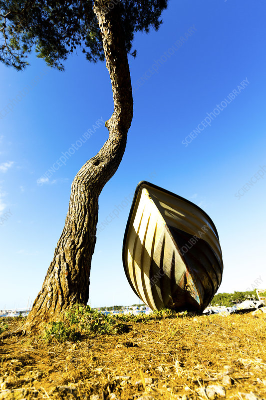 Fishing boat under a tree