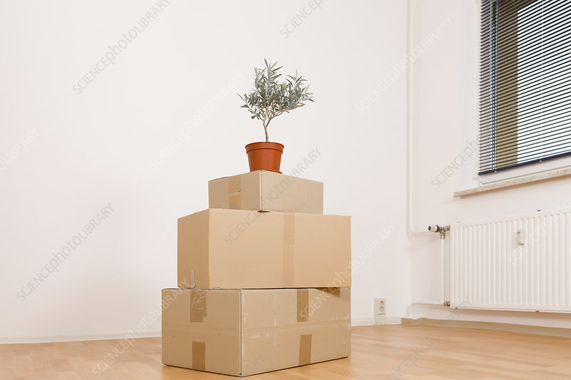 Cardboard boxes and pot plant