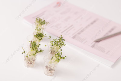 Plants in lab