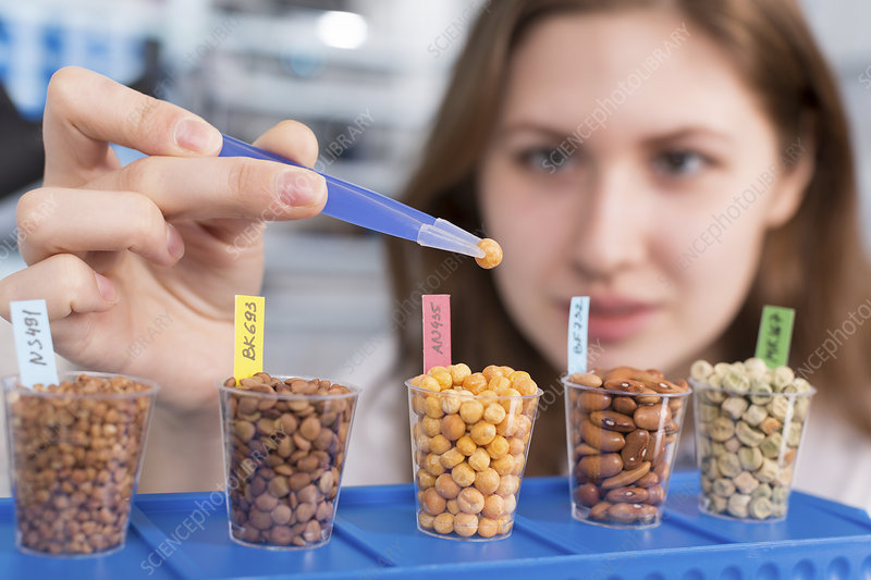Student testing food in lab